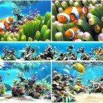 Sim Aquarium 3 Premium Ekran Koruyucu Full Tam indir