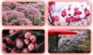 Japon Flowers Sakura Spring 2 Wallpapers HD İndir